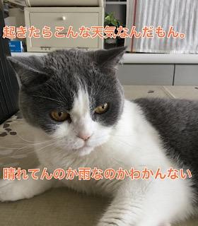 61910367-4D84-4AD3-91A3-944F7E3CD3D7.jpeg