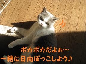 IMG_2079.jpg