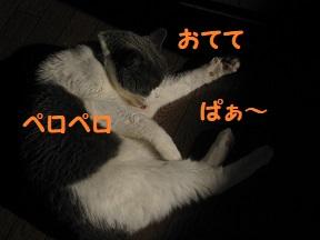 IMG_2557.jpg