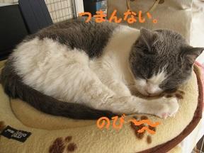IMG_3245.jpg