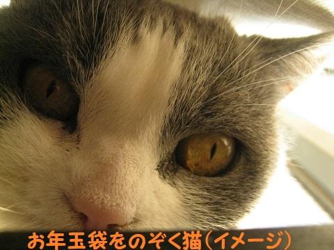 IMG_9385.jpg