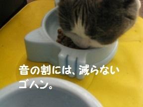 IMG_6903.jpg