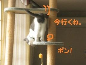 popon (2).jpg