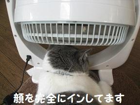 nakanaka (2).jpg