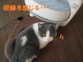 nakanaka (3).jpg